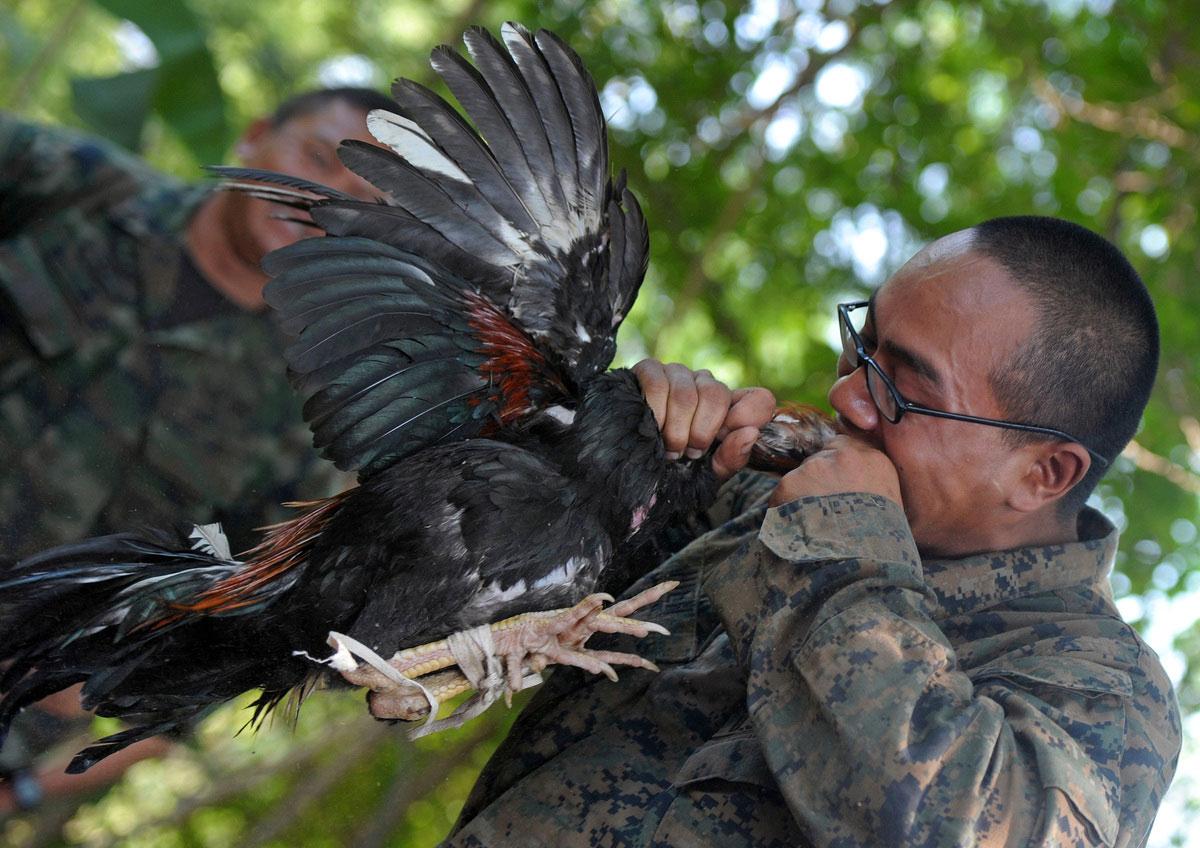 US-Marine-Biting-Head-Off-Chicken-Thailand